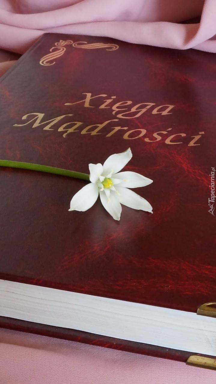 Biały kwiat na Księdze Mądrości