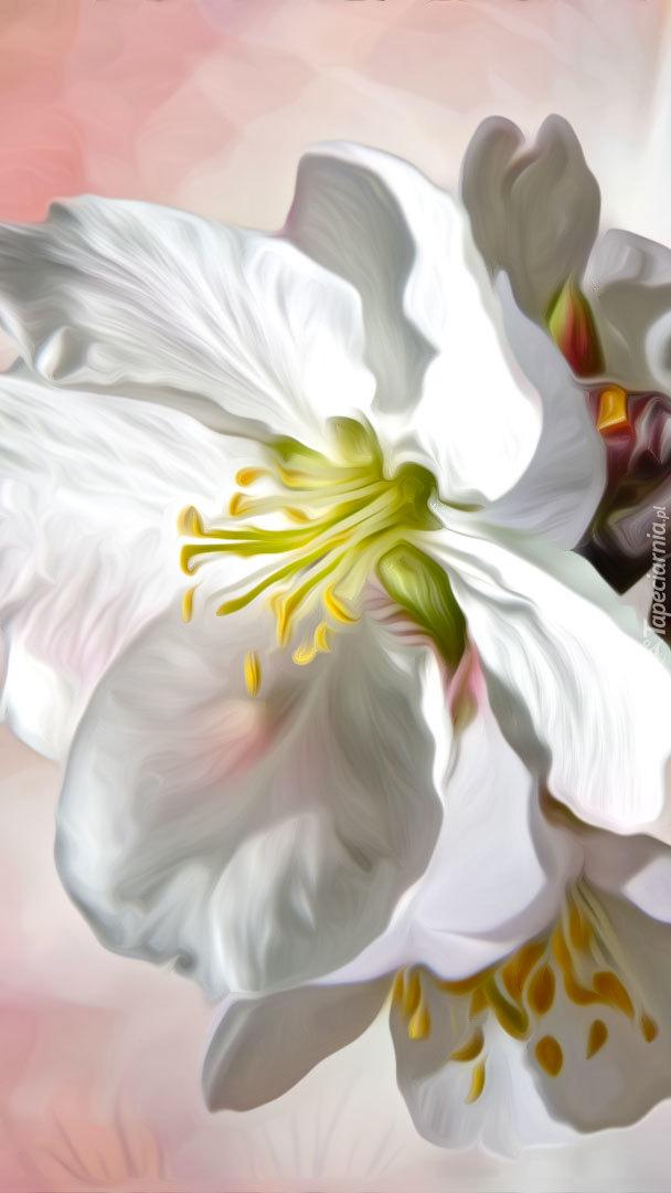 Biały kwiat w blasku słońca