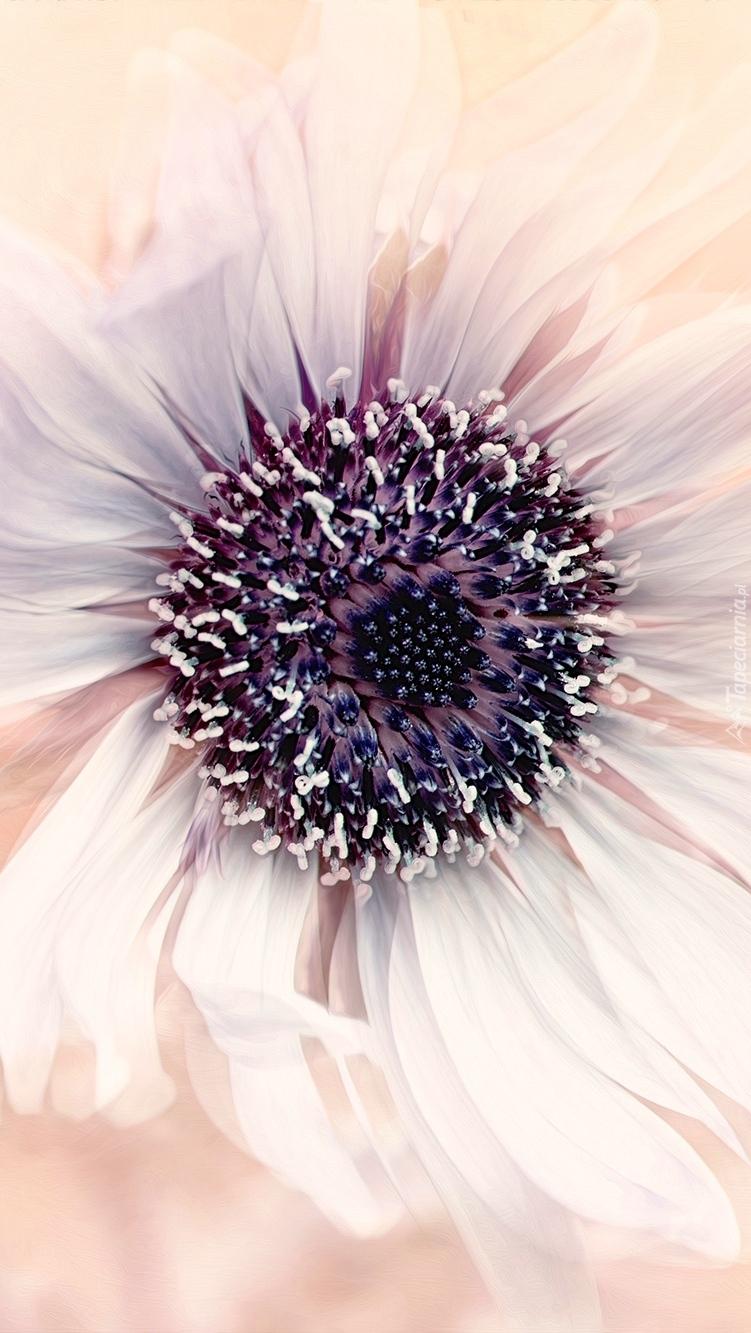 Biały kwiat w zbliżeniu
