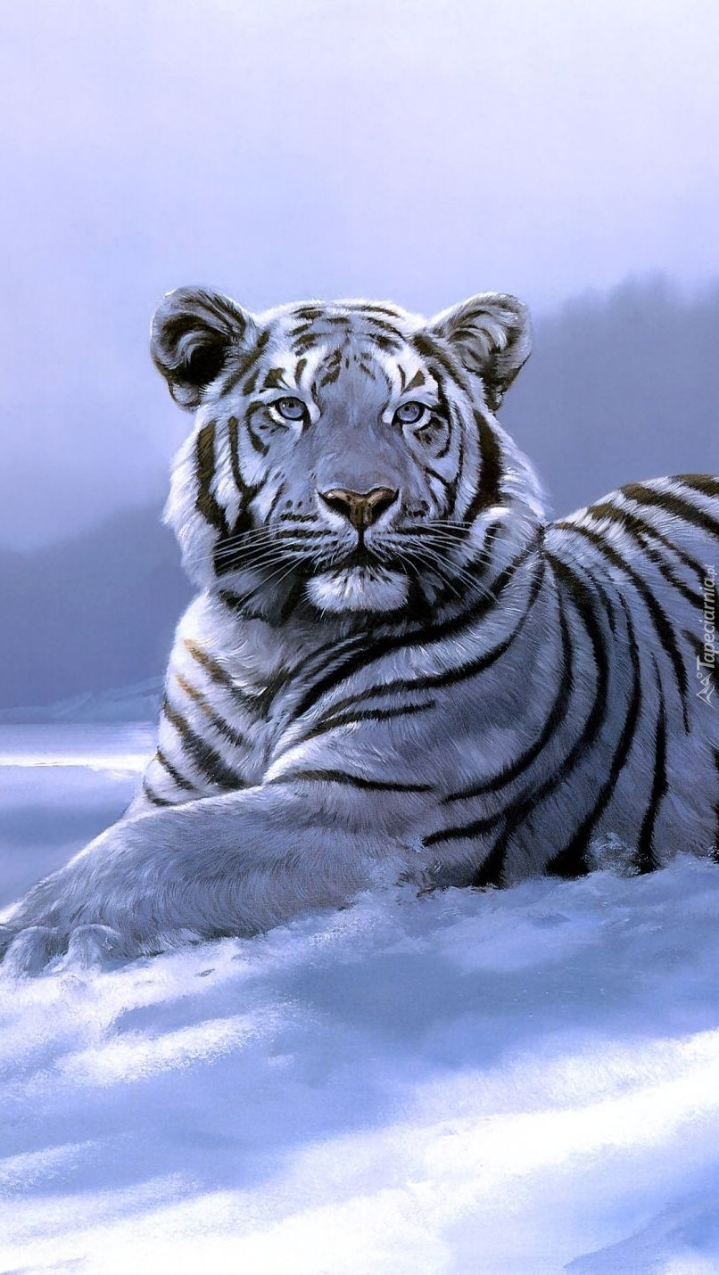Biały tygrys na śniegu