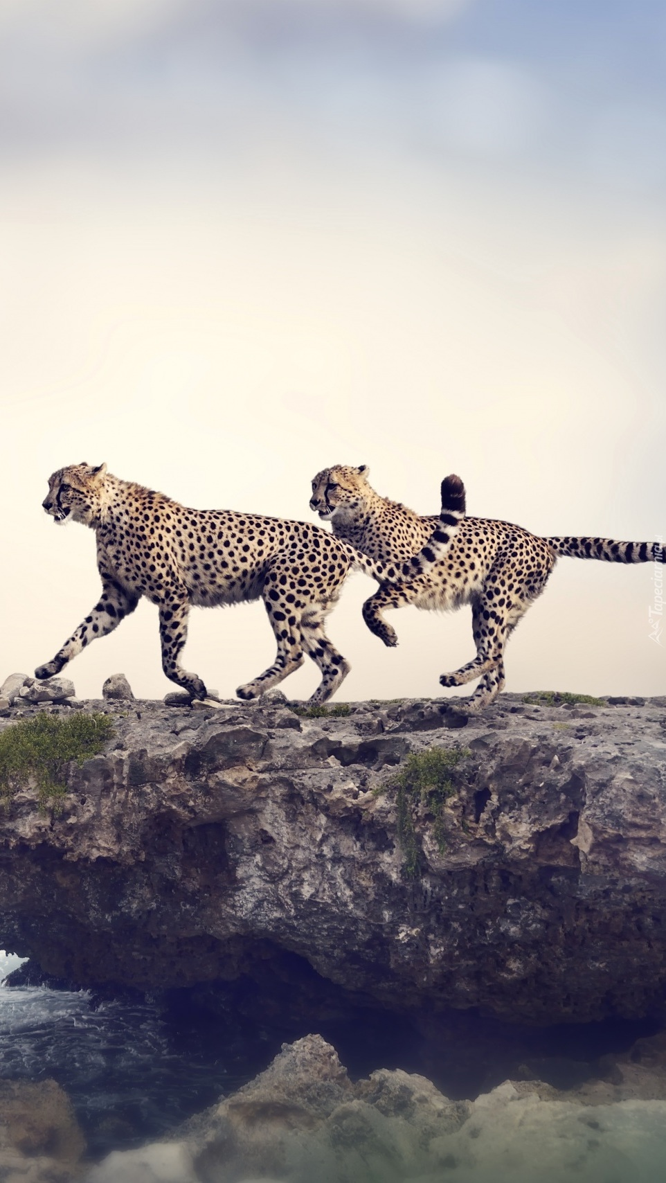 Bieg gepardów