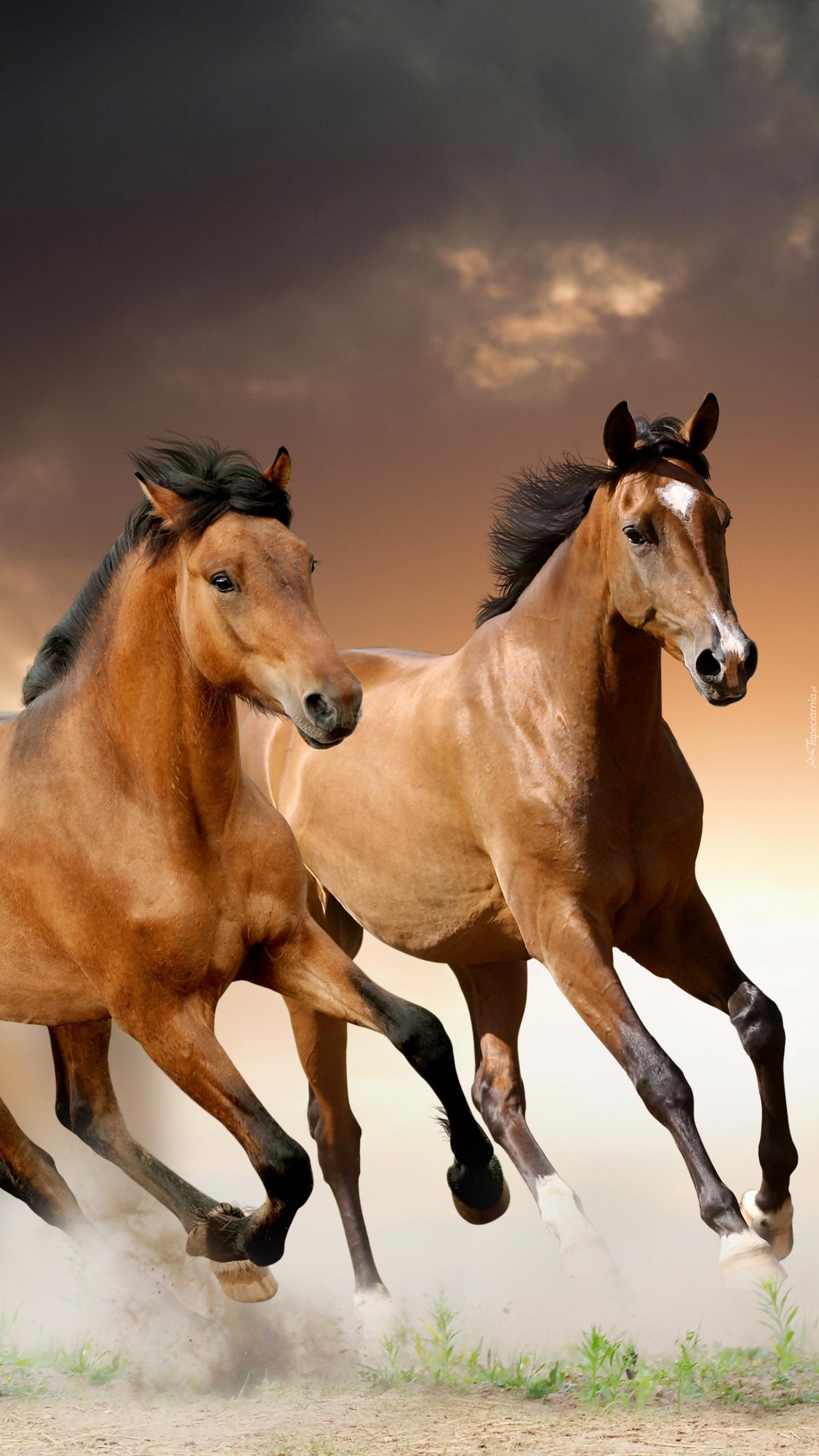 Bieg koni