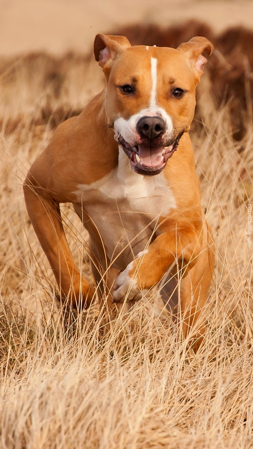 Bieg radosnego psa