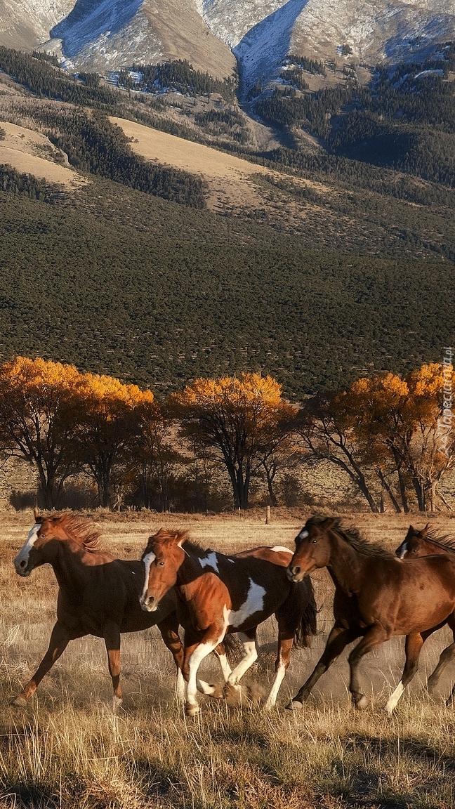 Biegnące konie na tle gór
