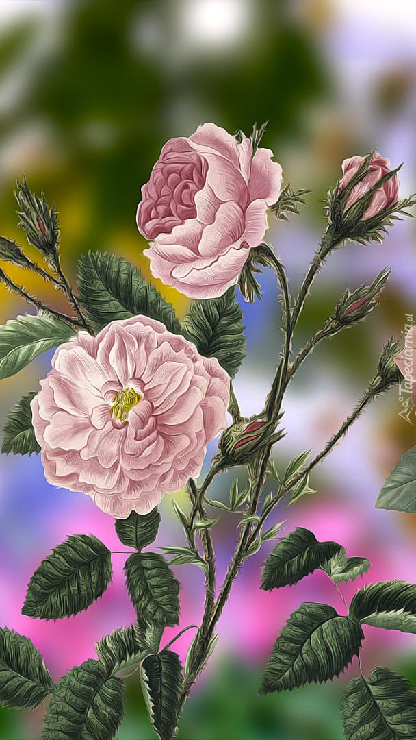 Bladoróżowe róże z pąkami w grafice