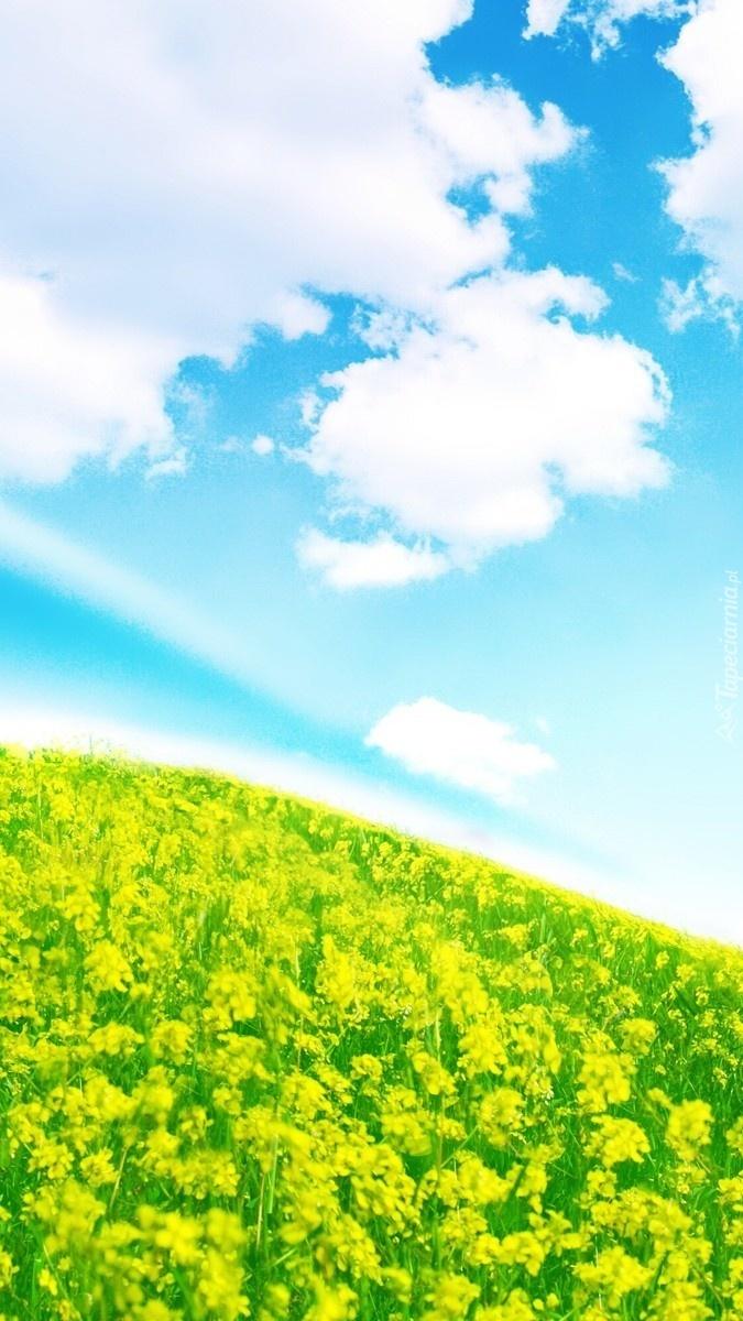 Błękitne niebo nad łąką