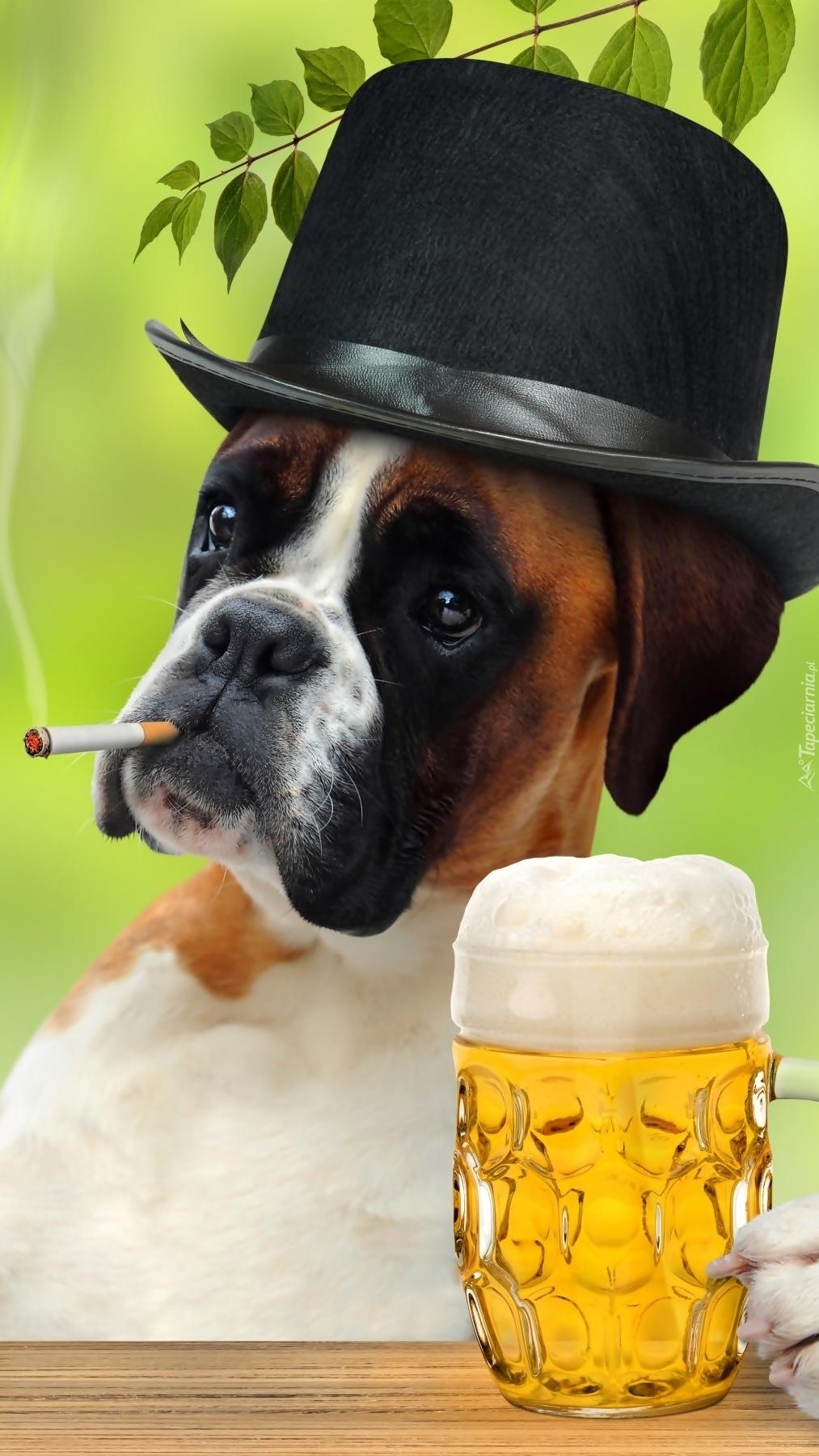 Bokser w kapeluszu z kuflem piwa i papierosem