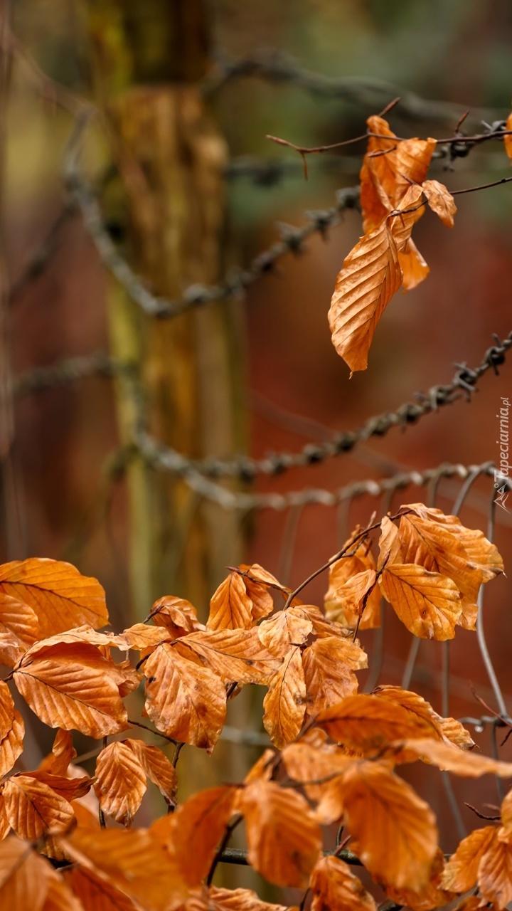 Brązowe liście