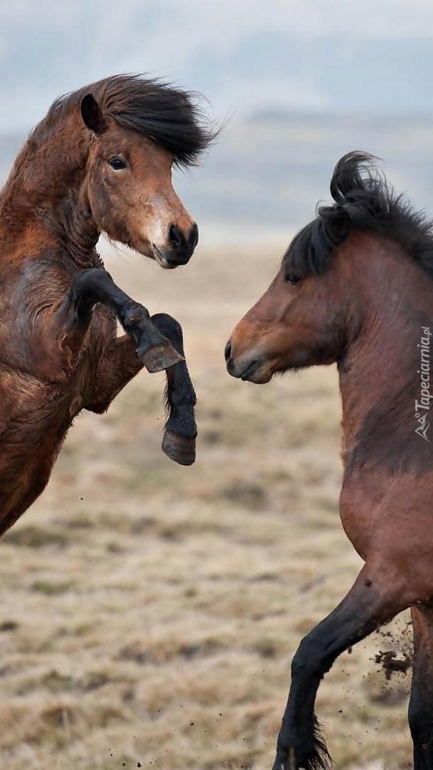 Brykające konie