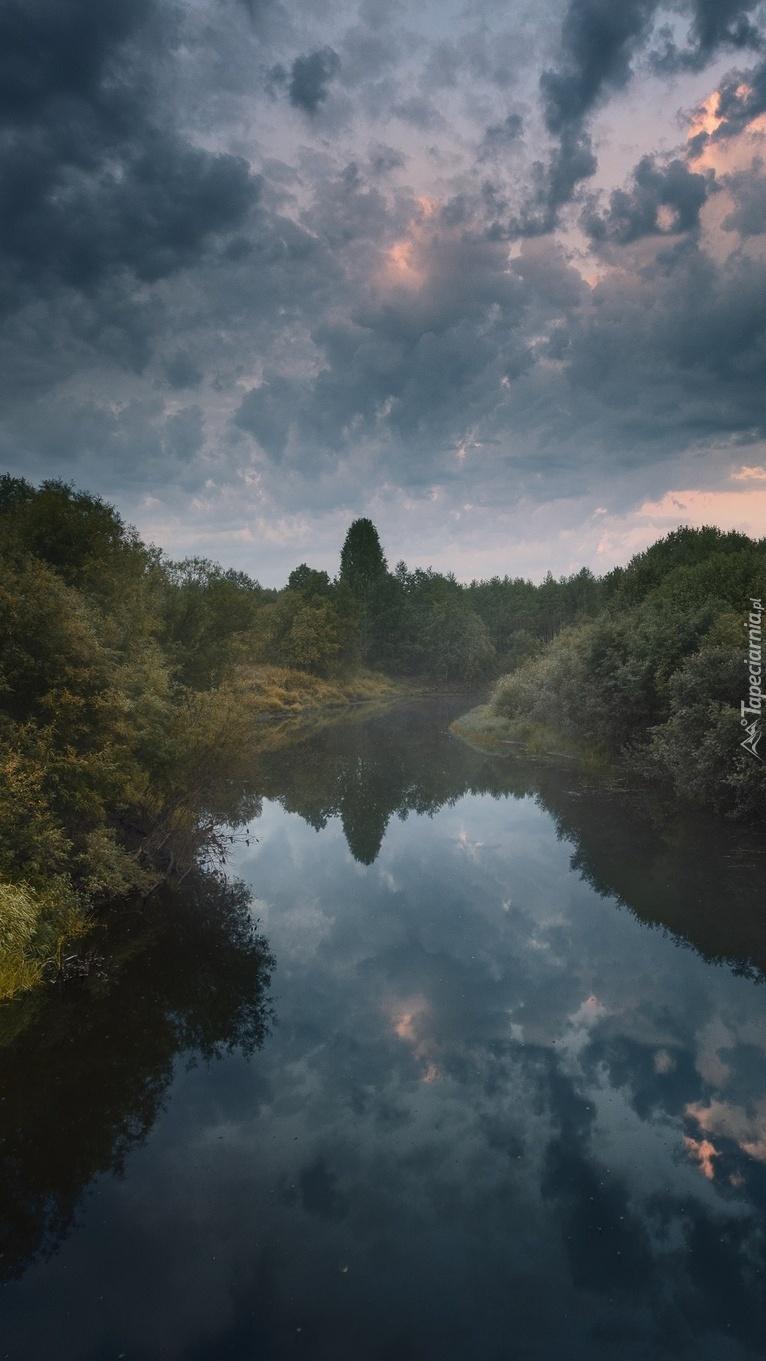 Brzegi rzeki Puya porośnięte drzewami