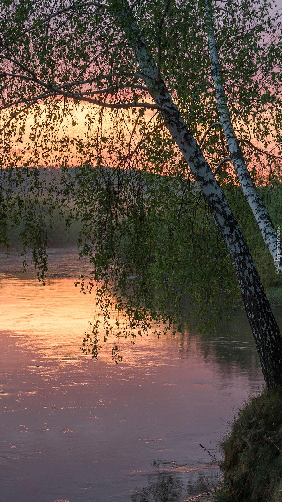 Brzozy nad rzeką