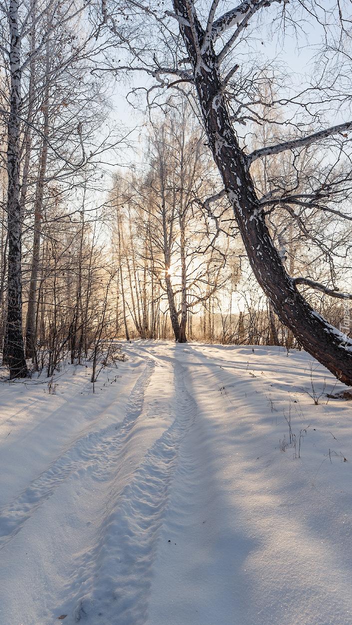 Brzozy przy drodze zasypanej śniegiem
