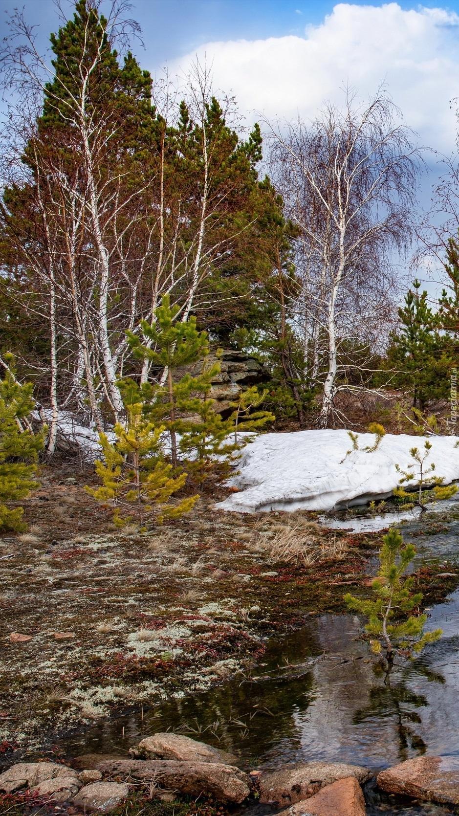 Brzozy w śniegu nad rzeką