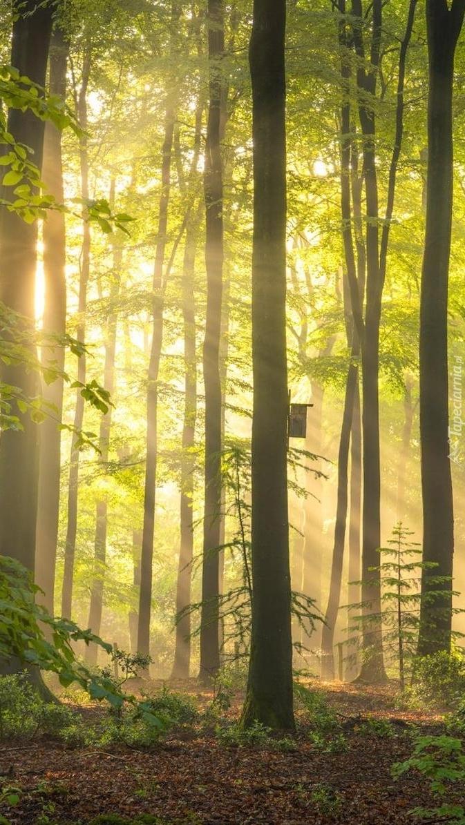 Budka lęgowa na drzewie w lesie