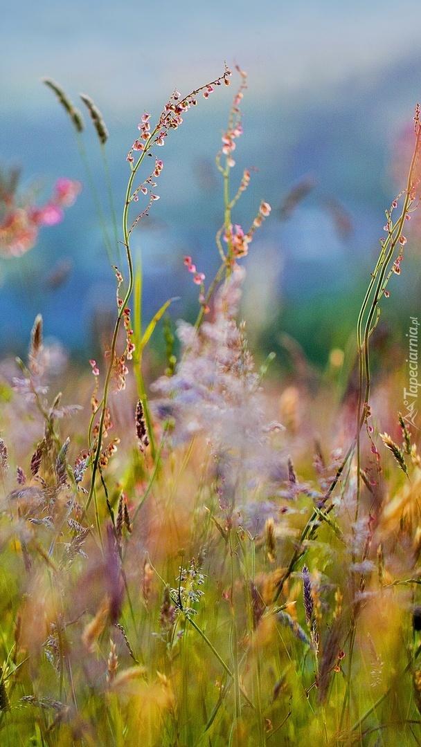 Bujna trawa na łące