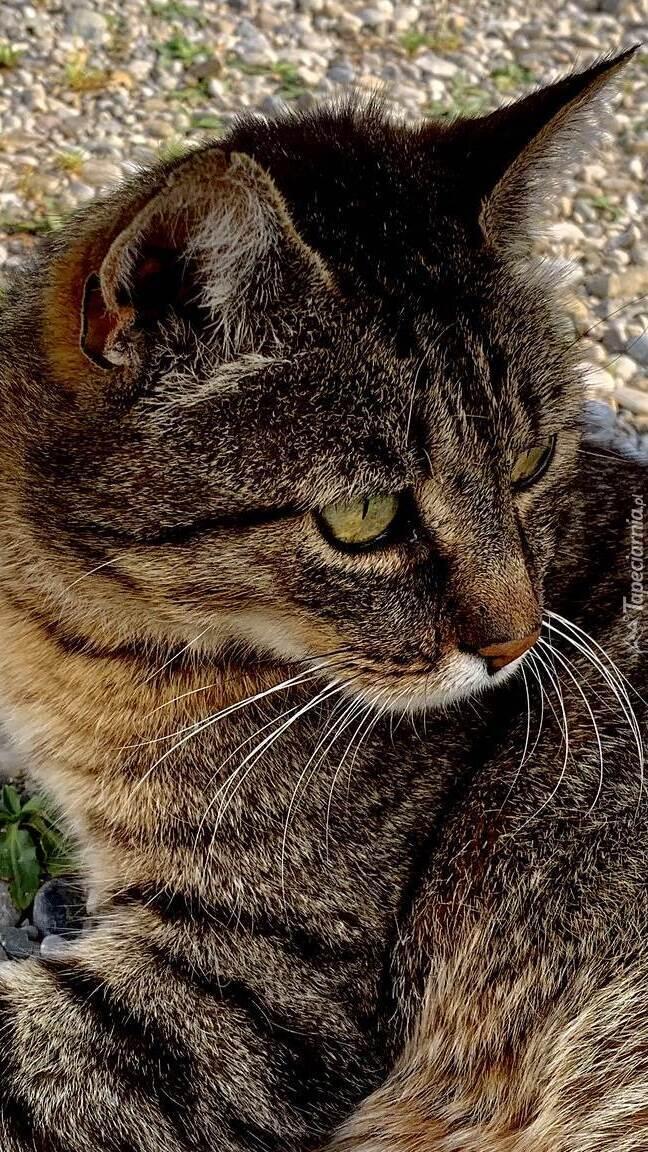 Bury kot