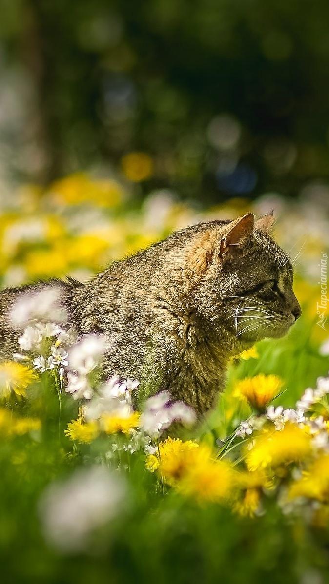 Bury kot na ukwieconej łące