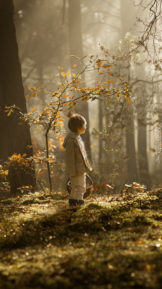 Chłopiec z koszykiem w lesie