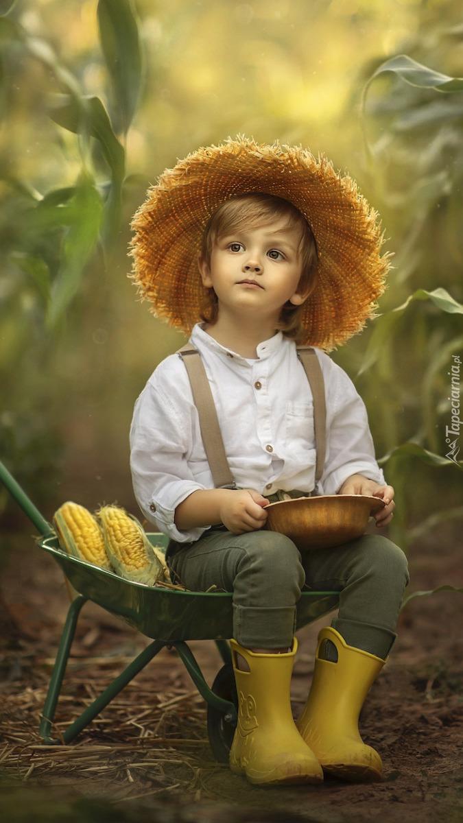 Chłopiec z kukurydzą na taczce