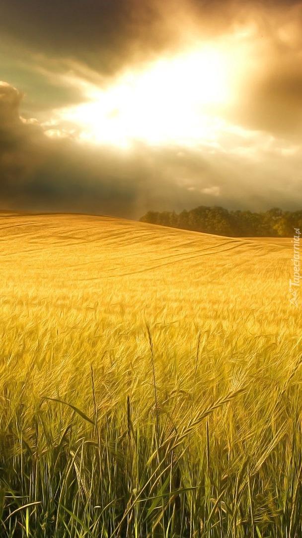 Chmury nad polem pszenicy