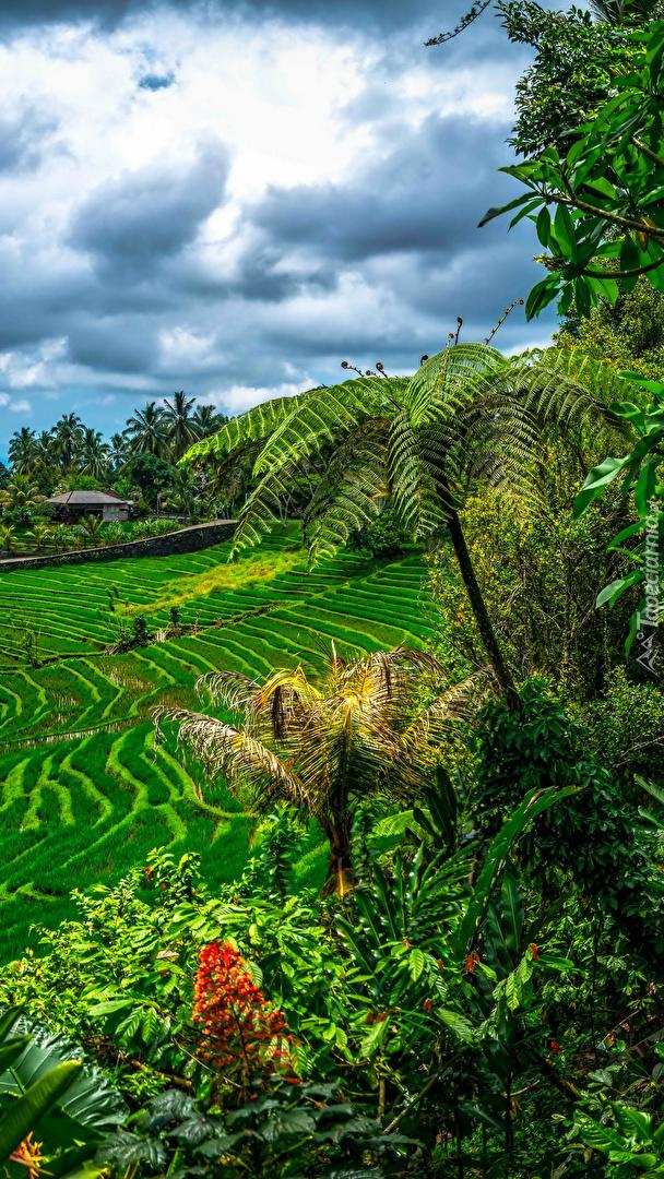 Chmury nad polem uprawnym i palmami