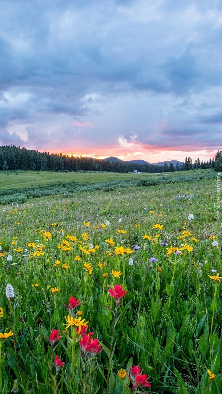Chmury nad ukwieconą łąką