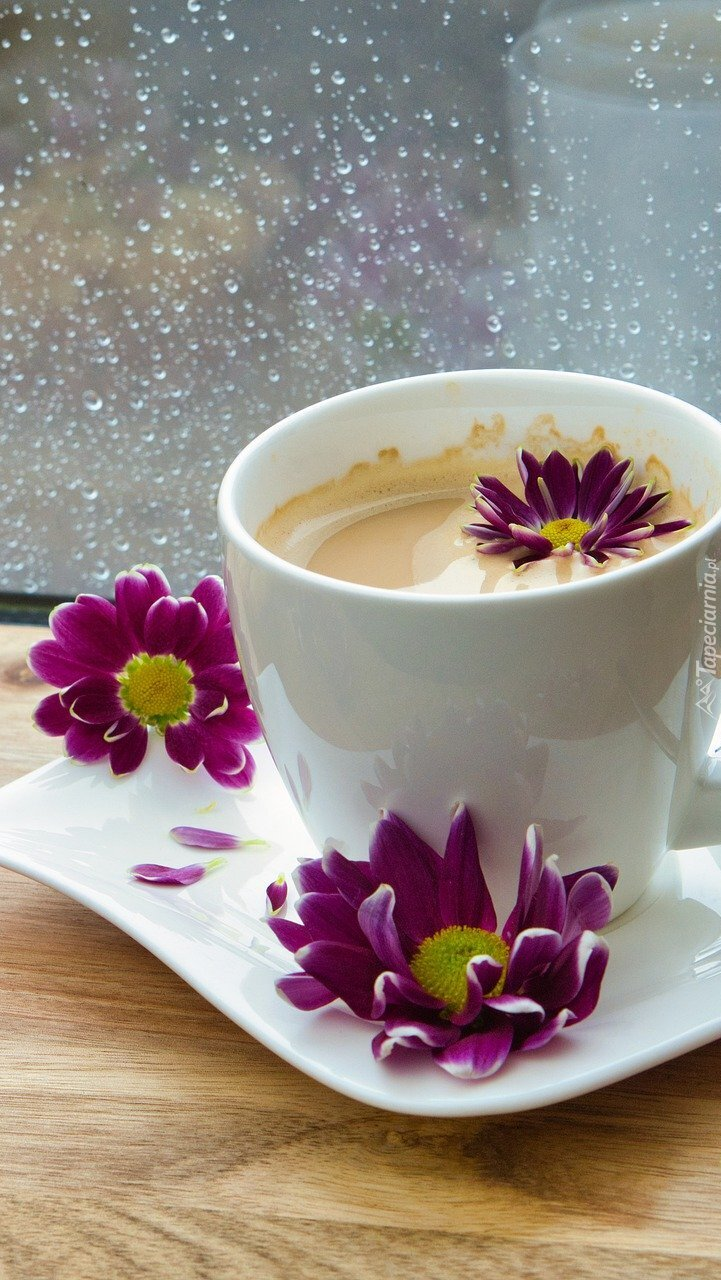 Chryzantemy na filiżance kawy