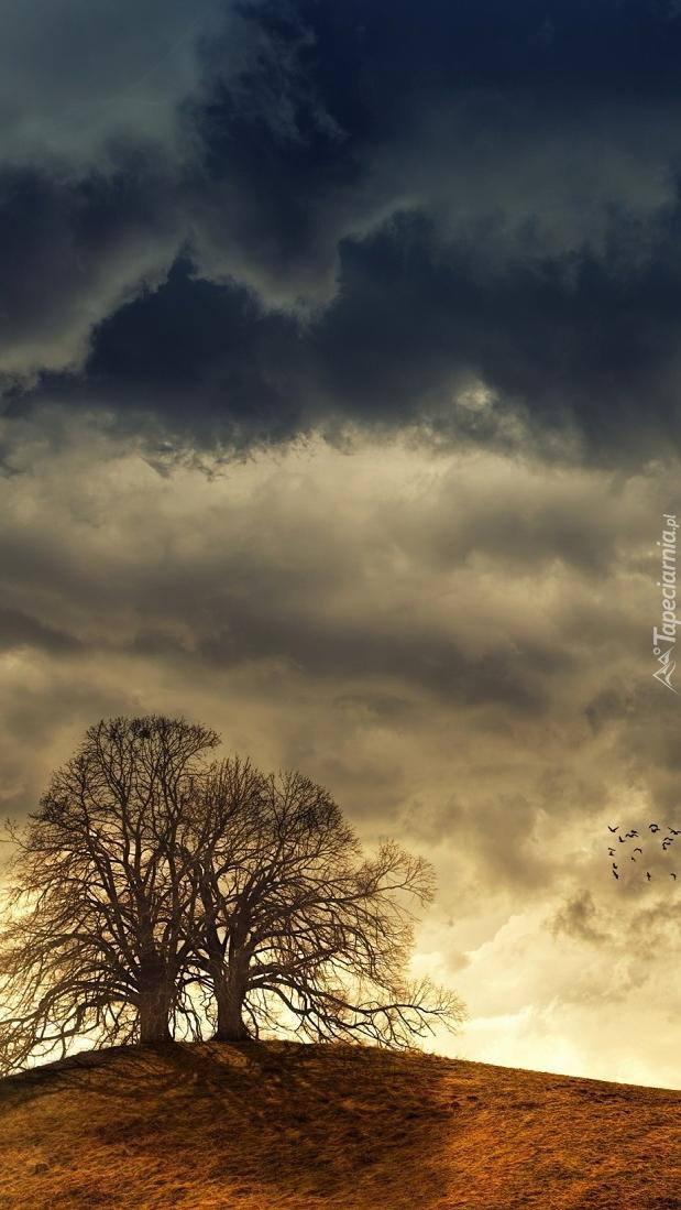 Ciemne chmury nad drzewami