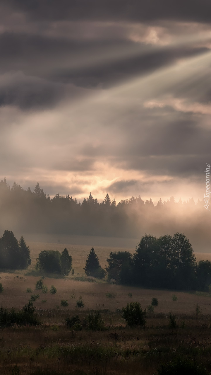 Ciemne chmury nad lasem