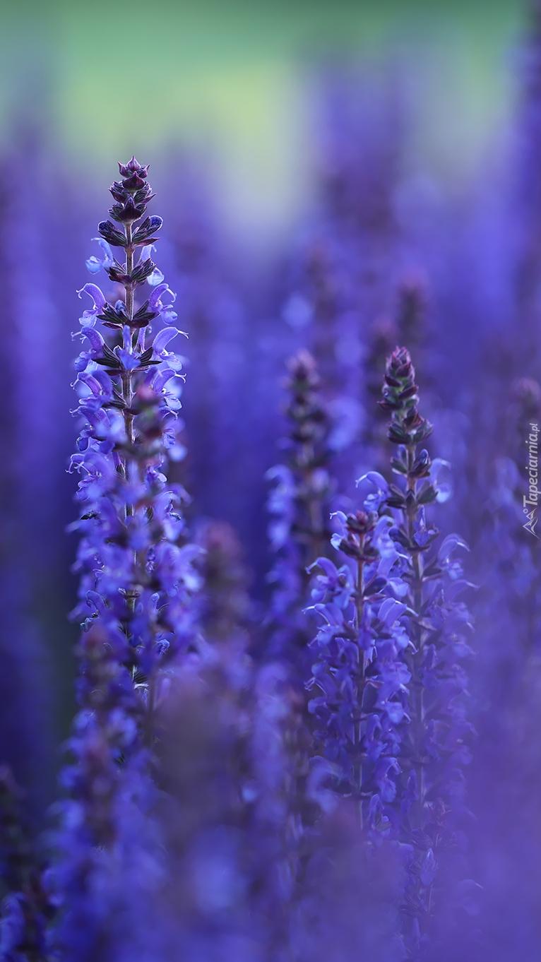 Ciemnoniebieskie kwiaty