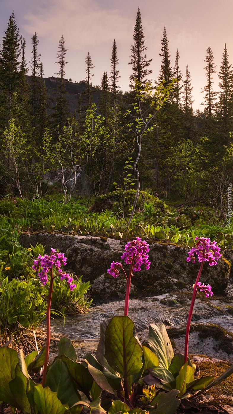 Ciemnoróżowe kwiaty przy strumyku