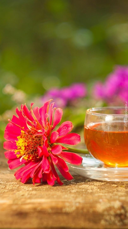 Cynia obok filiżanki z herbatą