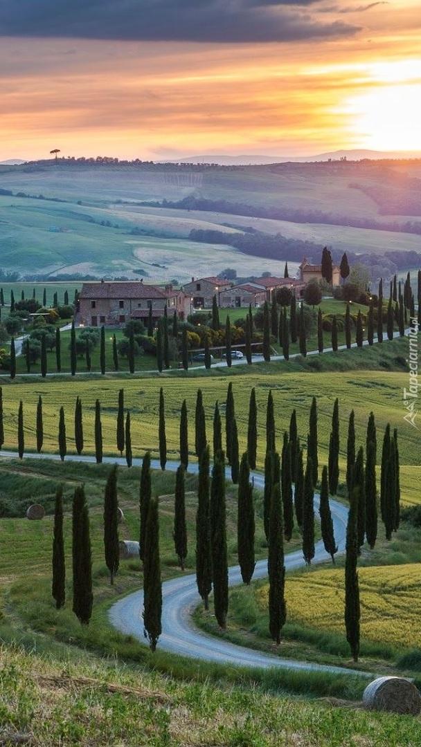 Cyprysy wzdłuż drogi na wzgórzach Toskanii