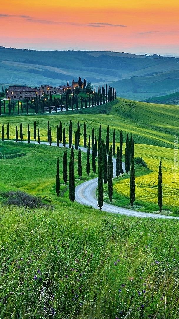 Cyprysy wzdłuż drogi w Toskanii