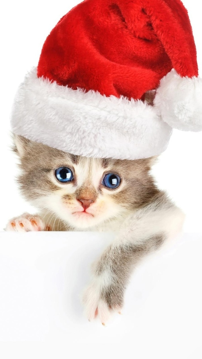 Czapeczka koteczka