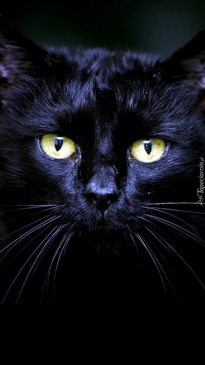 Czarny Kot O Złotych Oczach Tapeta Na Telefon