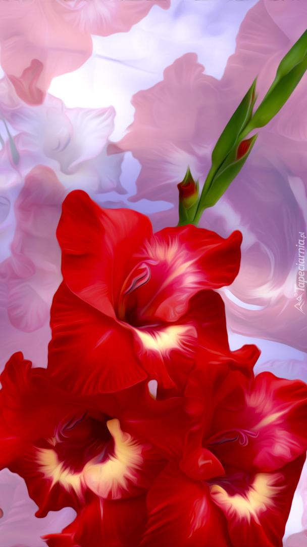 Czerwona gladiola