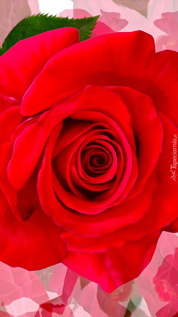 Czerwona rozkwitnięta róża z listkiem