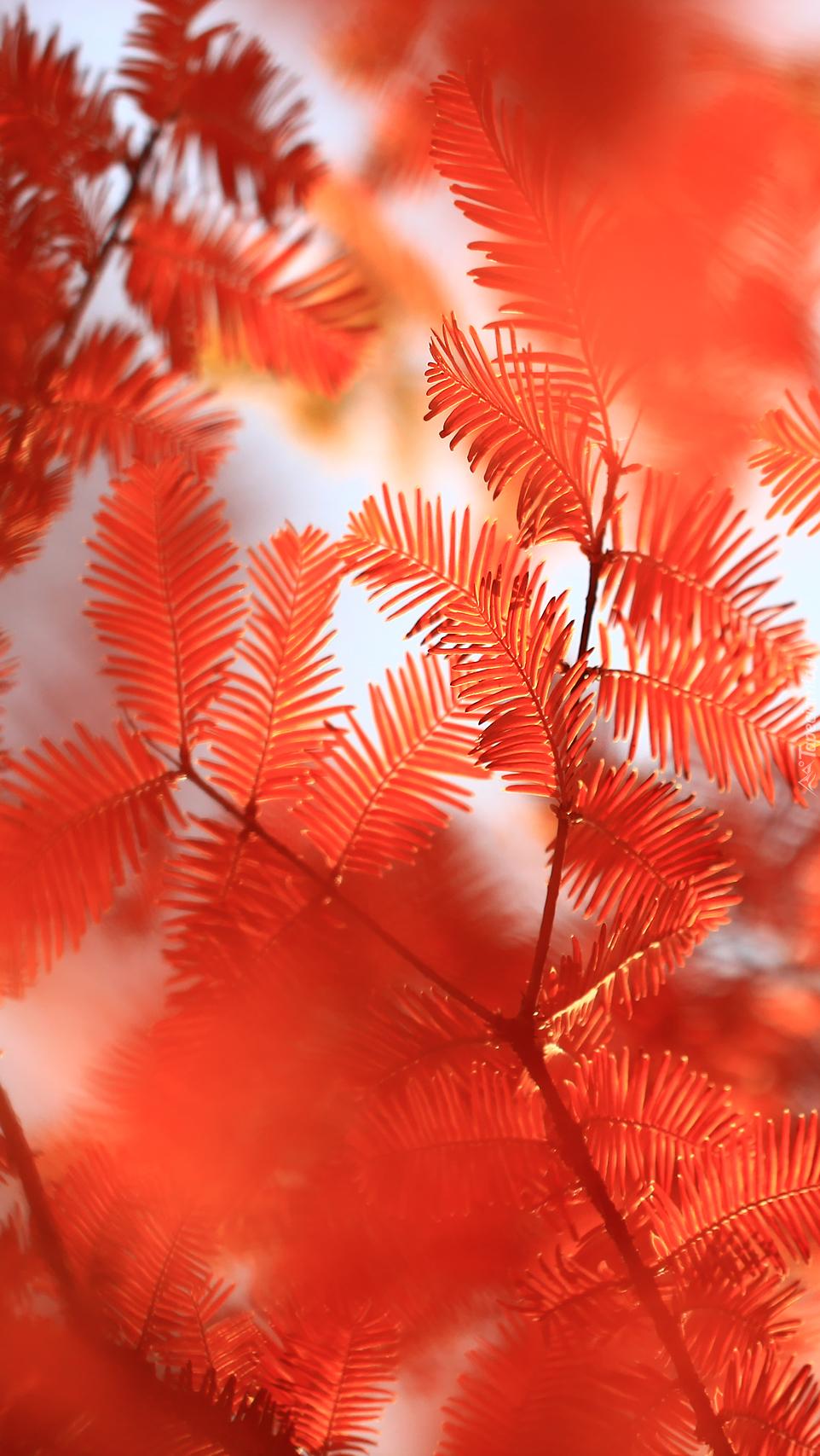 Czerwone gałązki