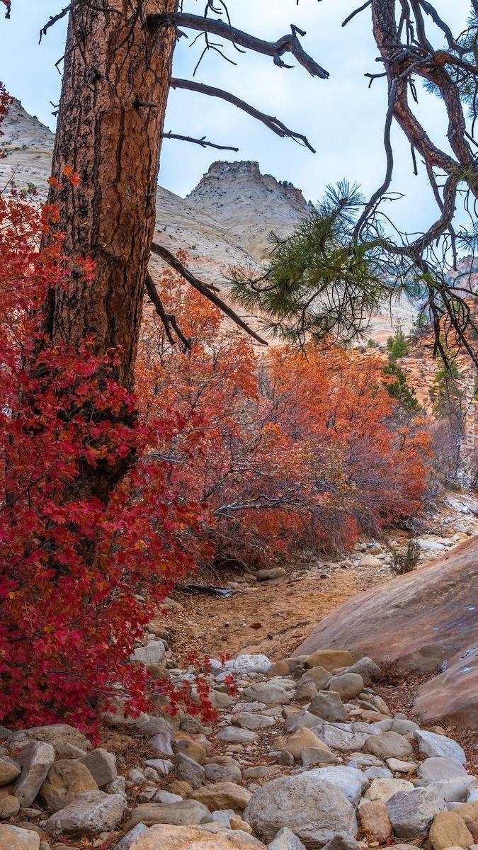 Czerwone krzewy i drzewo na skałach