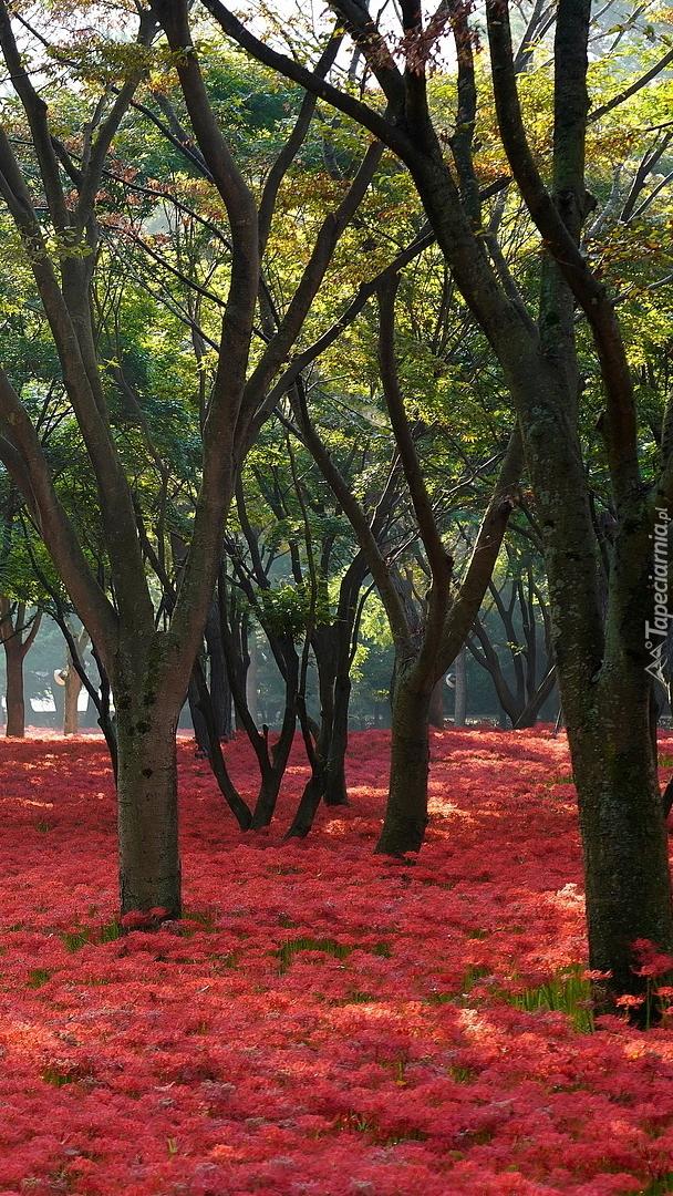 Czerwone kwiaty pod drzewami w parku