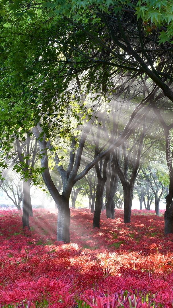 Czerwone kwiaty pod drzewami