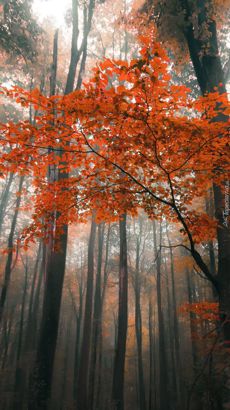 Czerwone liście na gałęziach