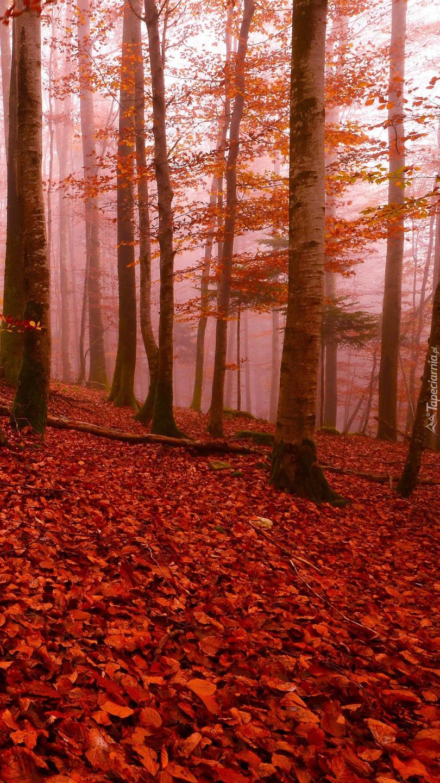 Czerwone liście pod drzewami