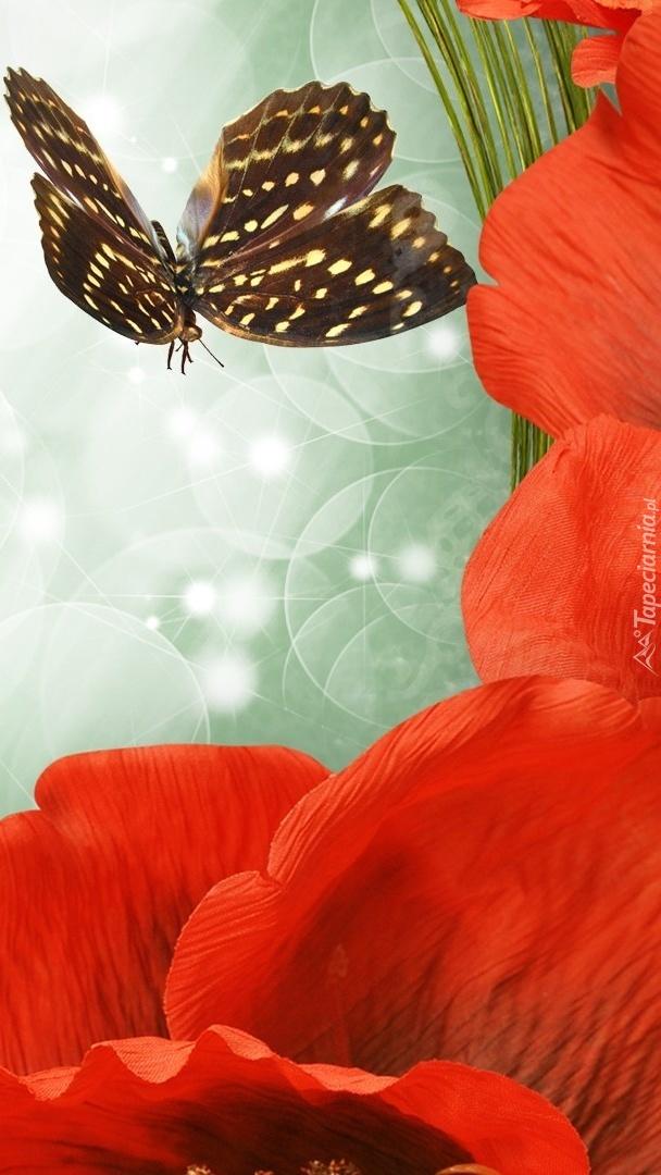 Czerwone maki z motylem