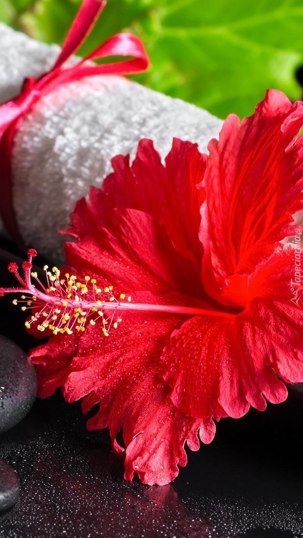 Czerwony kwiat hibiskusa