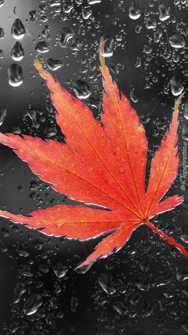 Czerwony liść klonu na szybie