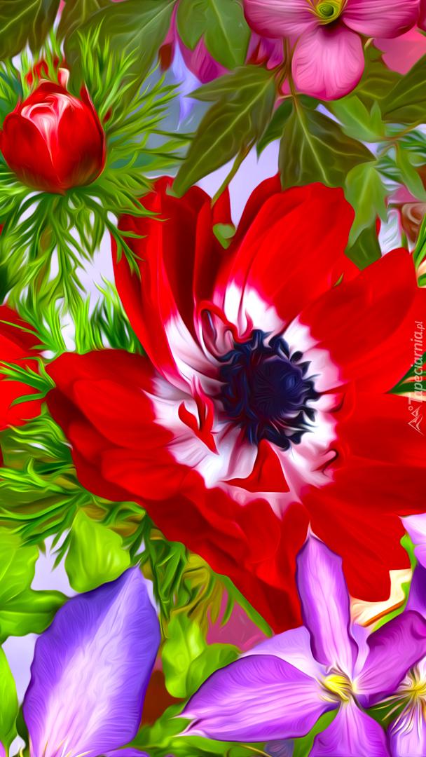 Czerwony zawilec