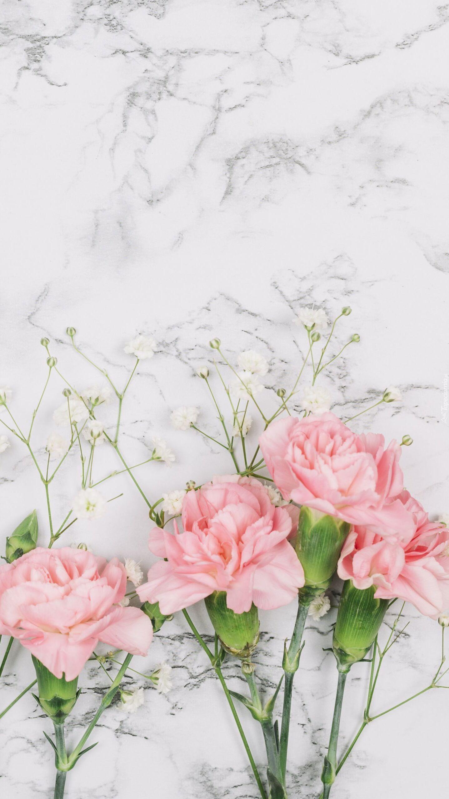 Cztery różowe goździki