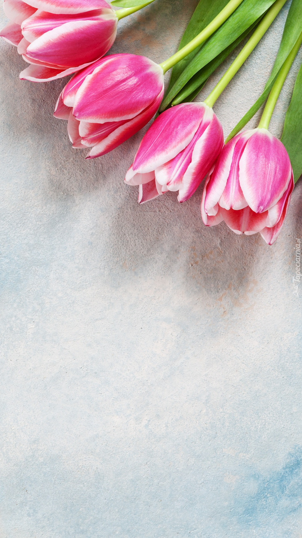 Cztery tulipany